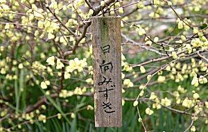 ue-hyugamizukiImg_7122
