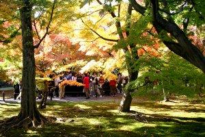 kt-toufukijinokouyou155_5580.jpg