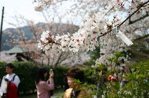 n-arasiyama130_3053.jpg