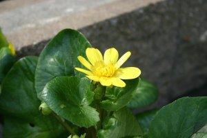 Jsiwabukimg_0864