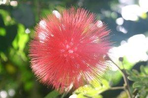 us-kariandora-red204_0453