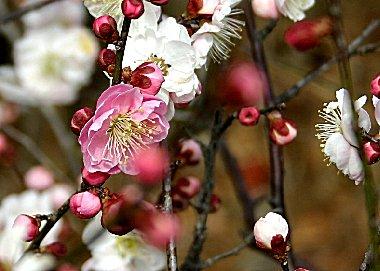 j-kouhakubai_2483.jpg